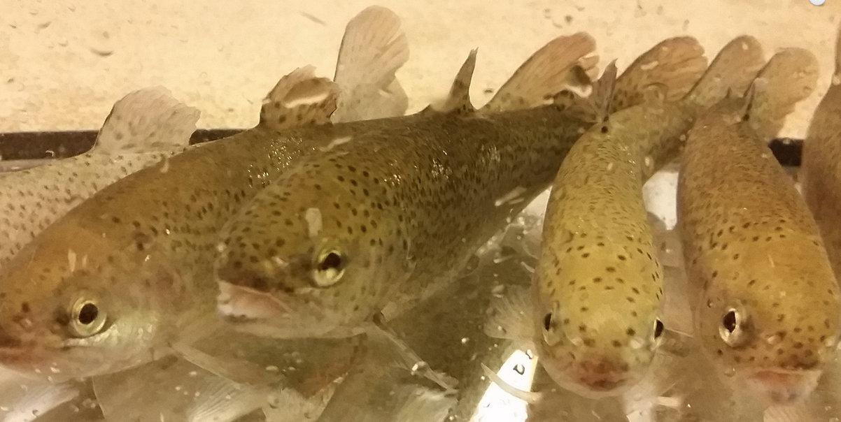 fisk i havet dating tjänster Gratis Dating franska webbplatser